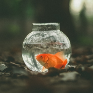 Attention Span of a Goldfish is much longer than social media browsing